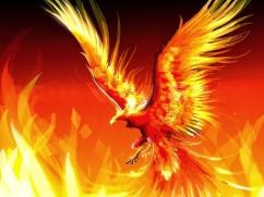 The-Fire-Phoenix